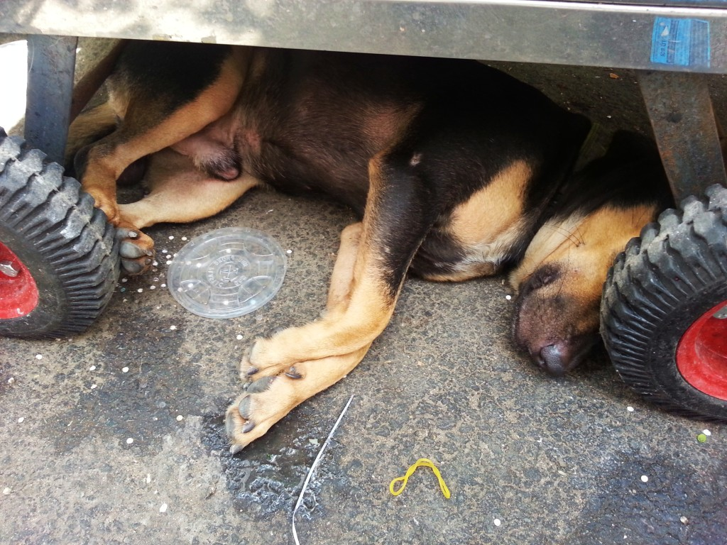 Sleepy puppy under a banh mi cart