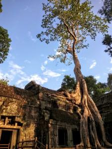 Tomb Raider tree at Ta Prohm